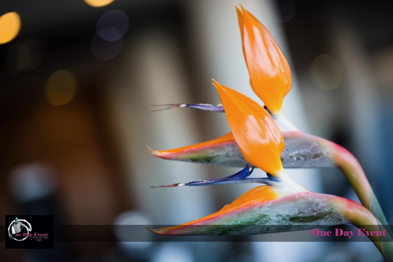 Création florale, un atout en décoration événementielle,
